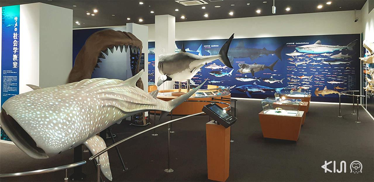 ที่เที่ยวตามเส้นทางของรถไฟ POKÉMON with YOU Train - Kesennuma Shark Museum