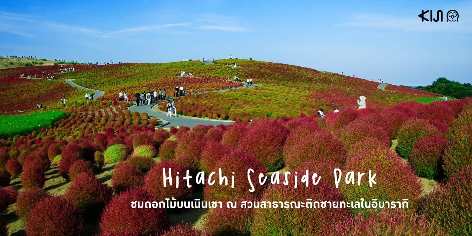 Hitachi Seaside Park ที่เที่ยวในอิบารากิ