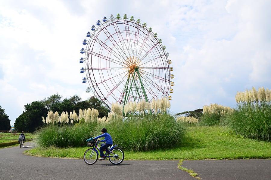 สามารถเอาจักรยานมาปั่นที่ Hitachi Seaside Park แห่งนี้ได้
