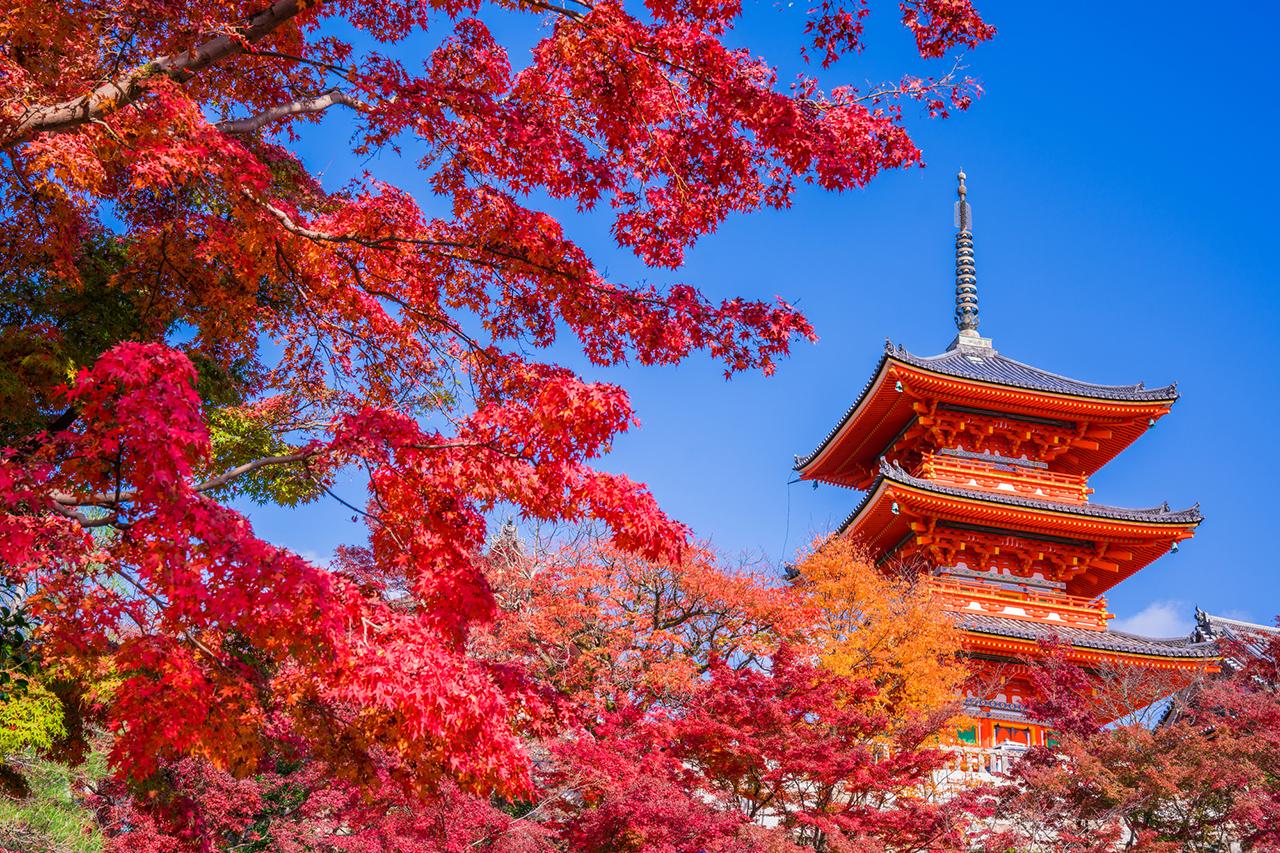 วัดคิโยมิสึที่โด่งดังเองก็เป็น จุดชมใบไม้เปลี่ยนสี ของ เกียวโต เช่นกัน