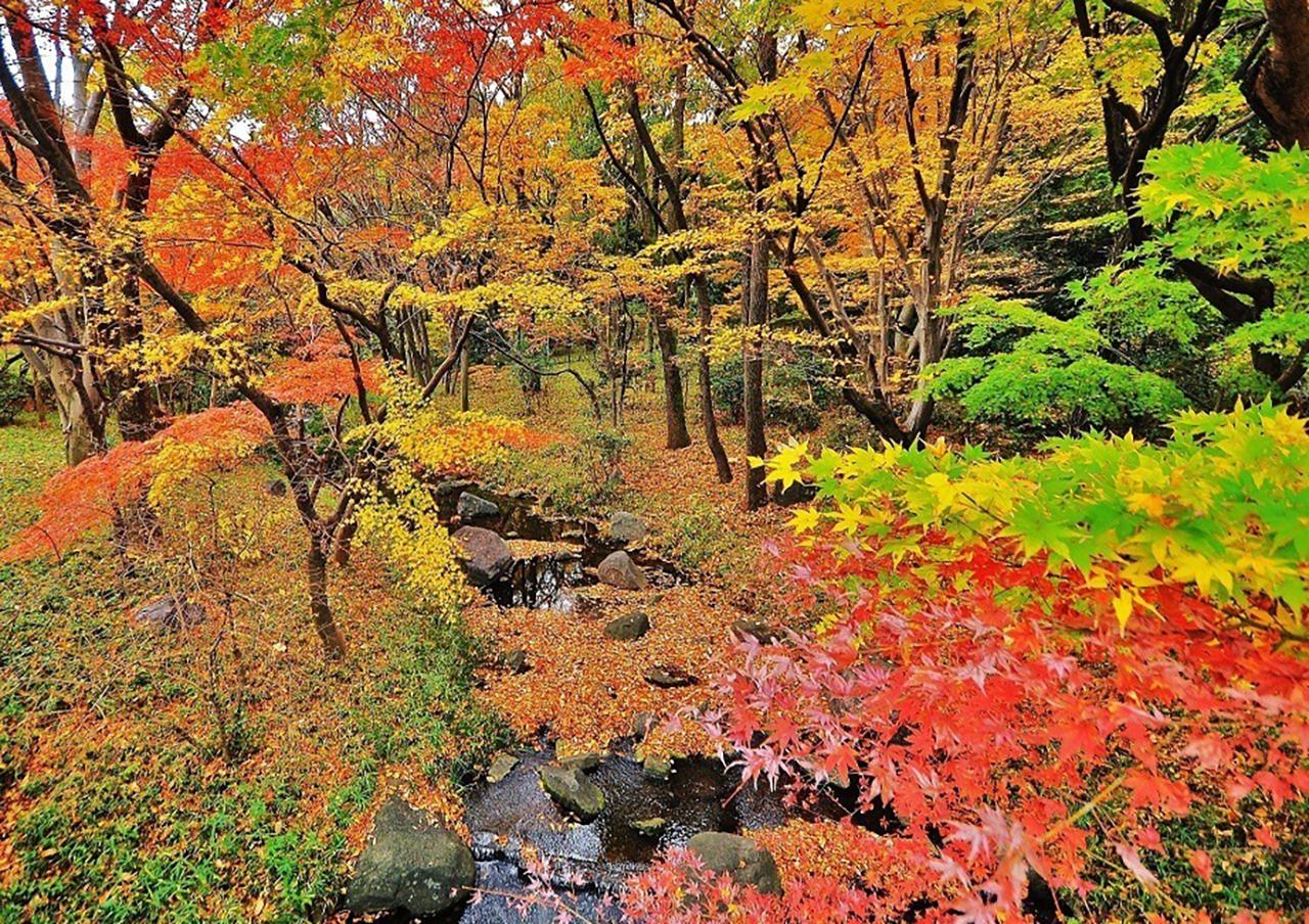 Kitanomaru Park จุดชมใบไม้เปลี่ยนสี โตเกียว