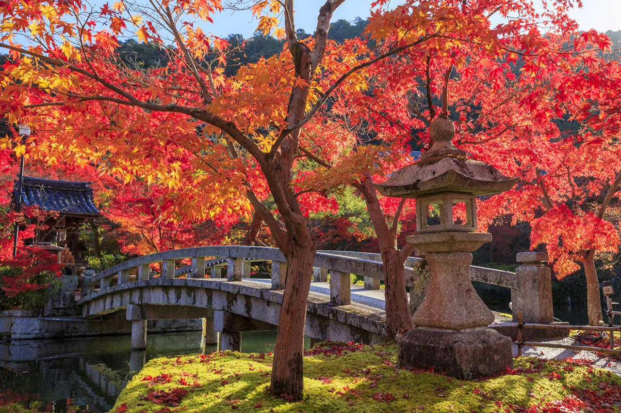สวนภายในวัดเอกันโด จุดชมใบไม้เปลี่ยนสี ของ เกียวโต