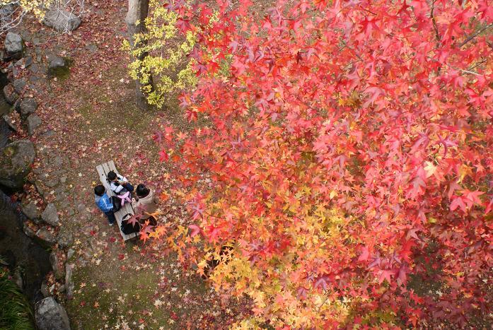 ในสวนที่จะกลายเป็นสถานที่จัดงาน Expo Park Autumn Foliage Festival