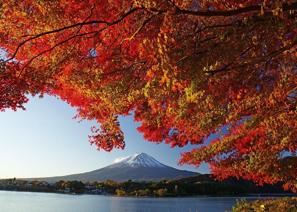 บรรยากาศการชมใบไม้เปลี่ยนสีเคล้ากับวิวฟูจิซังในงาน Fujikawaguchiko Autumn