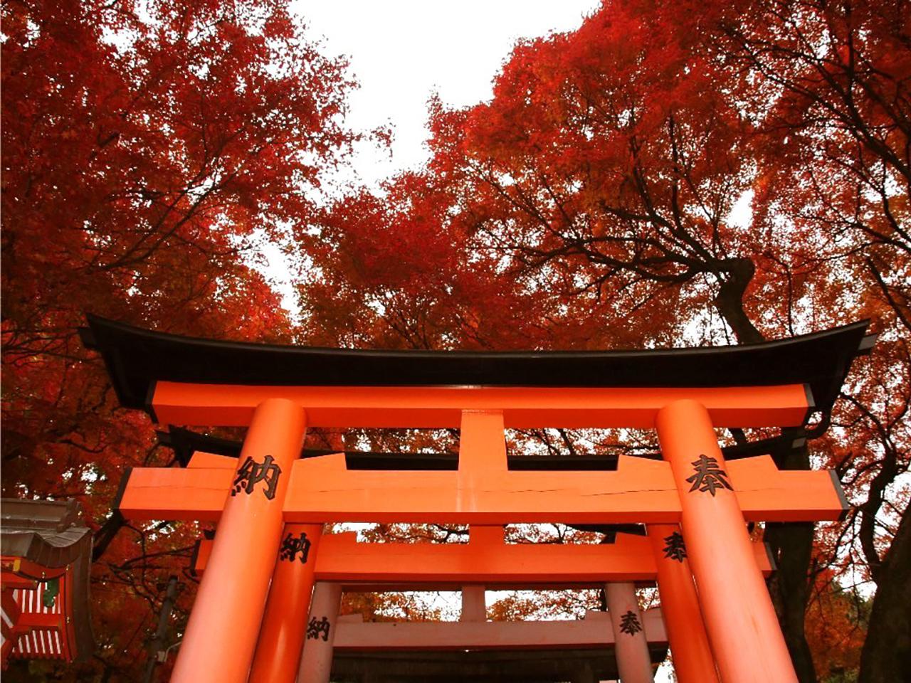 ศาลเจ้าฟูชิมิอินาริเป็นอีกหนึ่ง จุดชมใบไม้เปลี่ยนสี ใน เกียวโต