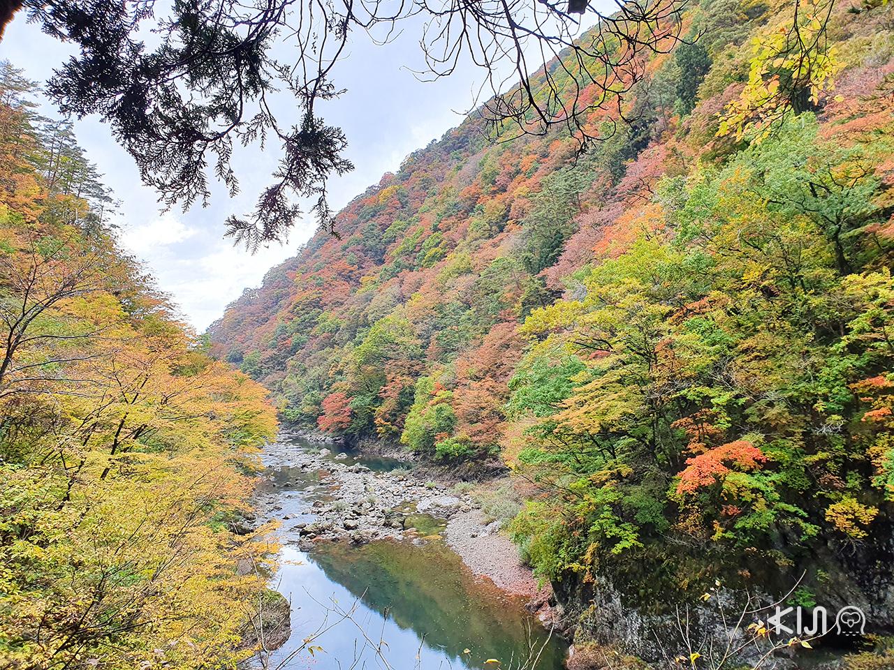ชม ใบไม้เปลี่ยนสี ที่ หุบเขาดาคิกาเอริ (Dakigaeri Gorge) ใน โทโฮคุ