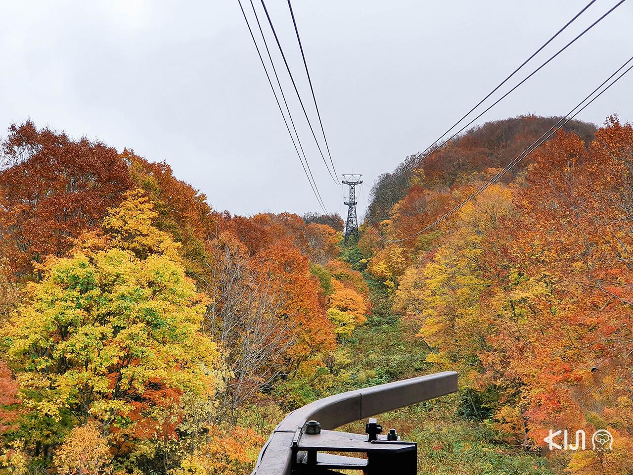 เที่ยว โทโฮคุ พร้อมชม ใบไม้เปลี่ยนสี ที่ Hakkoda Ropeway