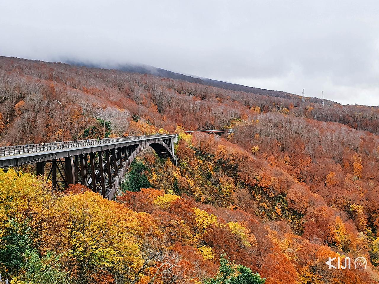 วิว ใบไม้เปลี่ยนสี กับสะพานโจกาคุระ (Jogakura Bridge) จ.อาโอโมริ ใน โทโฮคุ