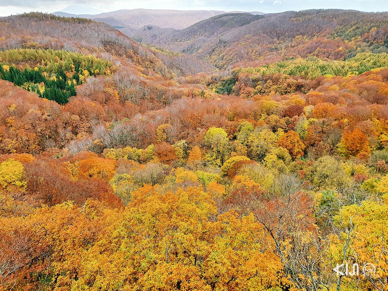 วิว ใบไม้เปลี่ยนสี ในภูมิภาค โทโฮคุ