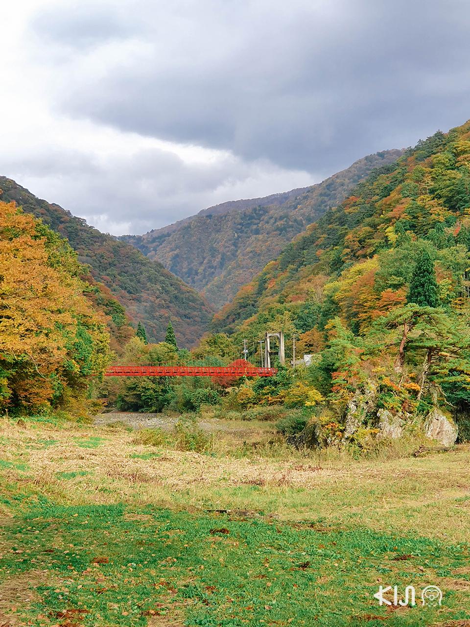 เที่ยวช่วง ใบไม้เปลี่ยนสี ในภูมิภาค โทโฮคุ : หุบเขาดาคิกาเอริ (Dakigaeri Gorge)