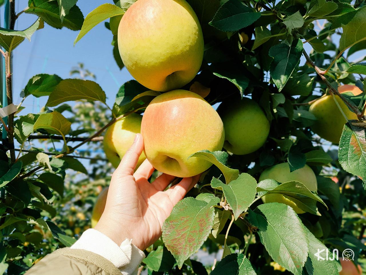 ทริปฤดู ใบไม้เปลี่ยนสี ใน โทโฮคุ : Sendai City Agriculture & Horticulture Center