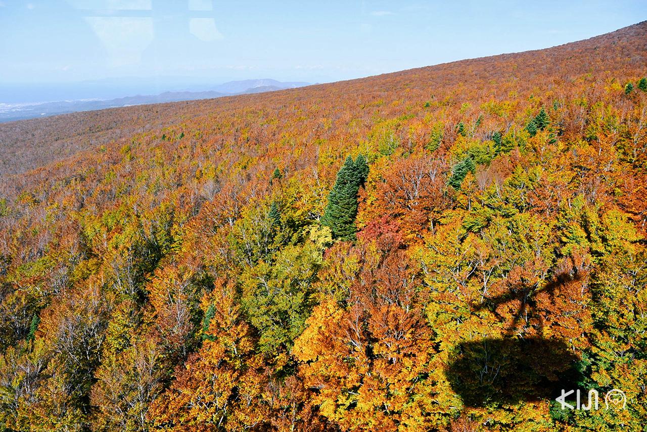 วิวช่วงฤดู ใบไม้เปลี่ยนสี ที่ โทโฮคุ