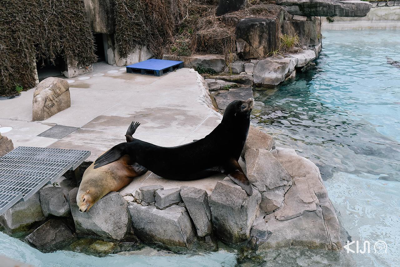 เที่ยว ชมความน่ารักของสัตว์นานาพันธุ์ที่ Kobe Oji Zoo จ.โกเบ
