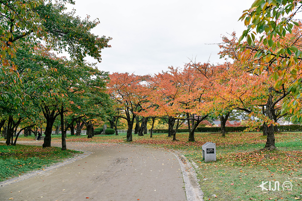 ชม ใบไม้เปลี่ยนสี ณ Morioka Castle Site Park, โทโฮคุ