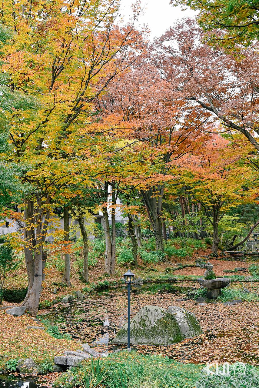 วิวความสวยงามของ ใบไม้เปลี่ยนสี ใน Morioka Castle Site Park จ. อิวาเตะ, โทโฮคุ
