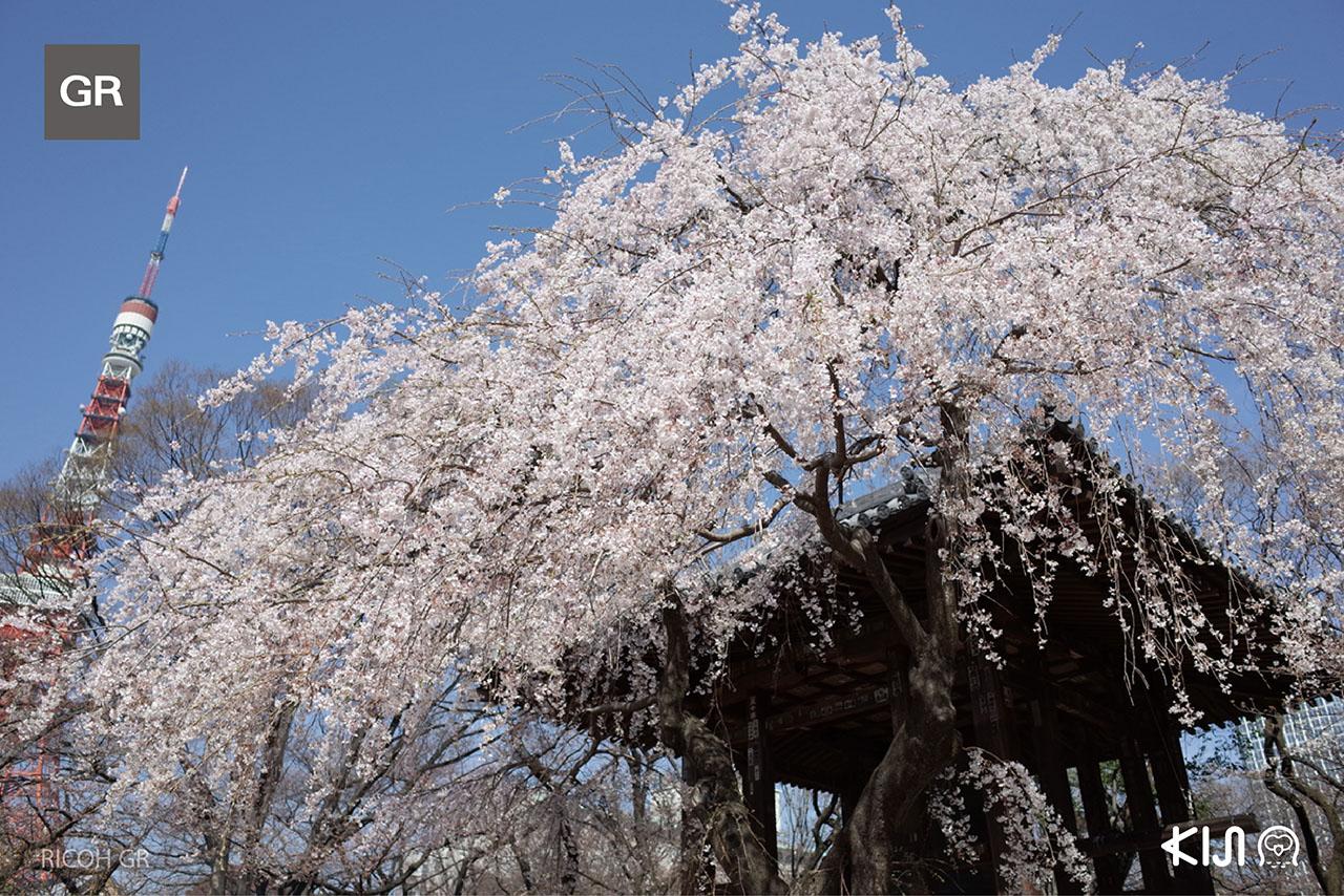 ภาพที่ถ่ายจากเที่ยวญี่ปุ่นกับ กล้อง Ricoh GR