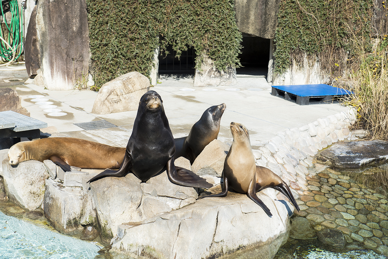 เที่ยว จ.โกเบ - สวนสัตว์โกเบโอจิ (Kobe Oji Zoo)