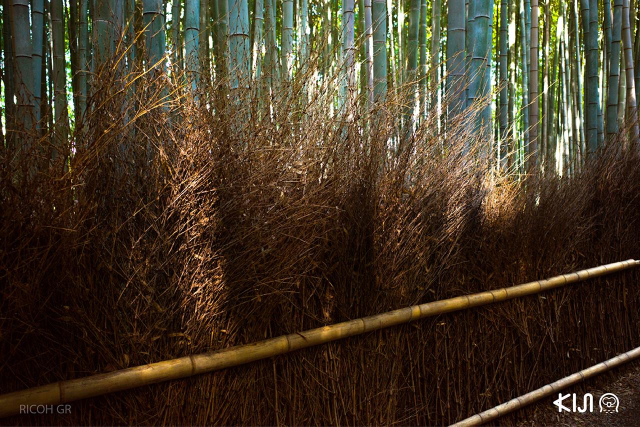อาราชิยาม่า (Arashiyama) จ.เกียวโต