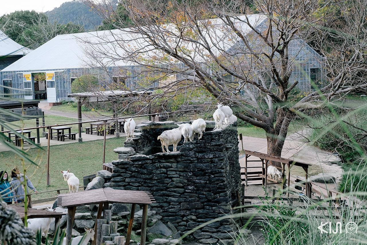 สถานที่เที่ยวในจ.นางาซากิ (Nagasaki) และ ซากะ (Saga) - Nagasaki Biopark
