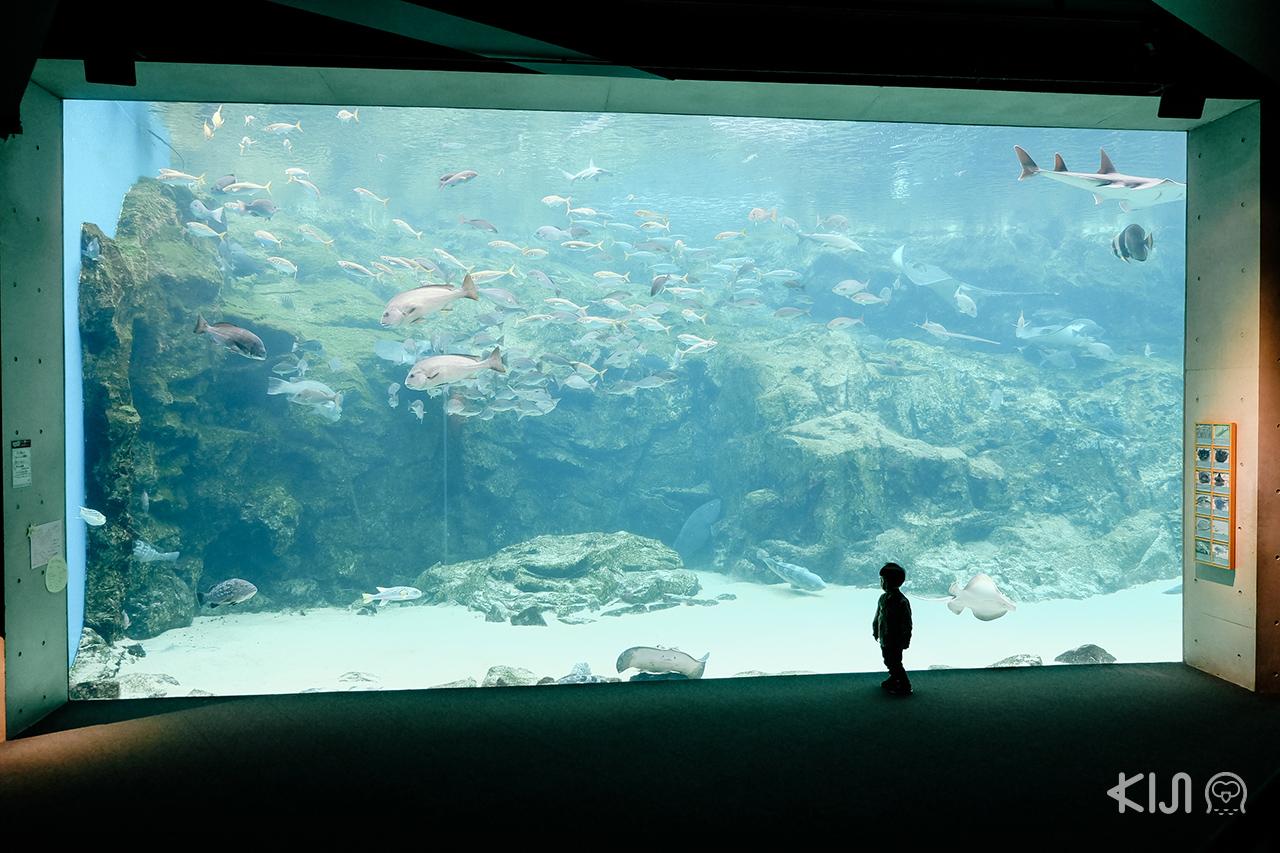 สถานที่เที่ยวในจ.นางาซากิ (Nagasaki) และ ซากะ (Saga) - Umi Kirara Aquarium