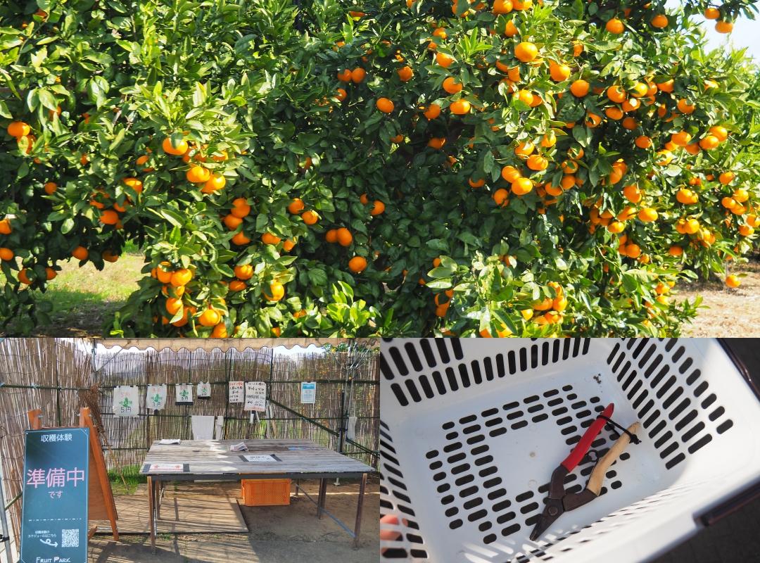 เก็บผลส้มกันที่ Hamamatsu Fruit Park Tokinosumika