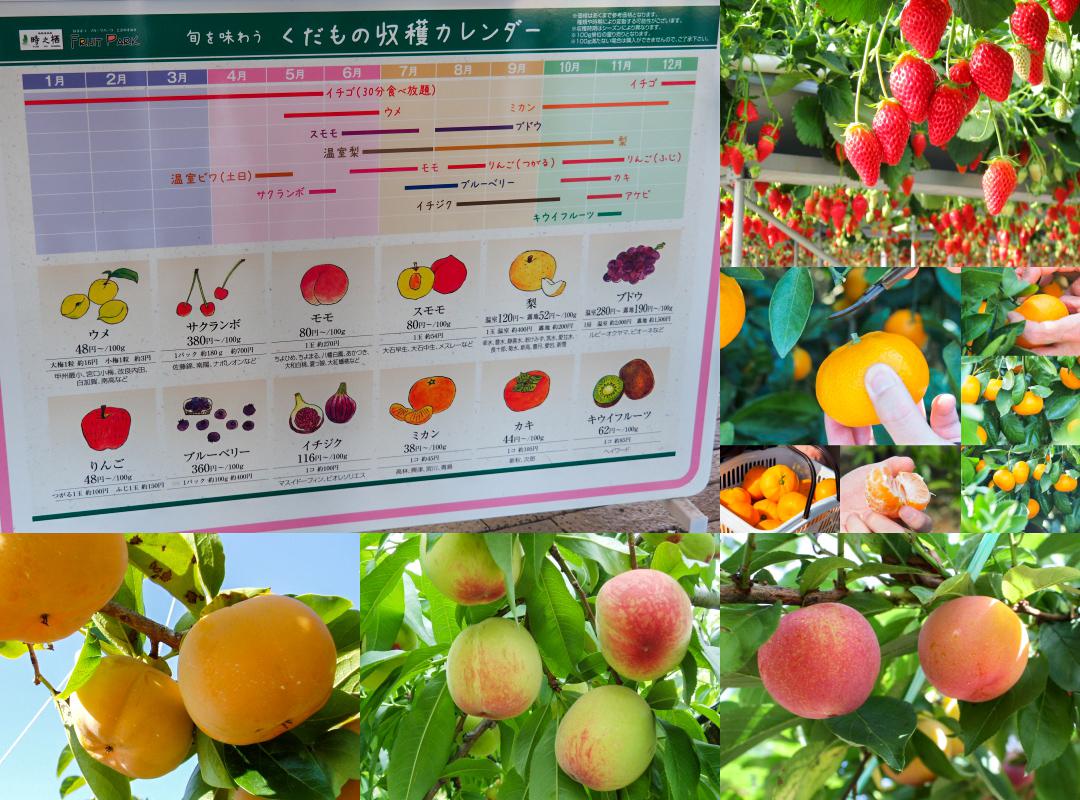 พืชผักผลไม้ใน Hamamatsu Fruit Park Tokinosumika