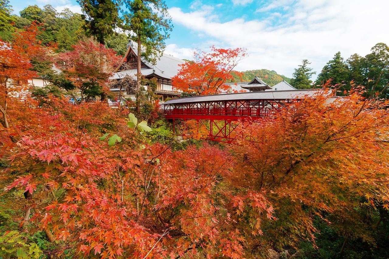 วัดโฮโคจิ (Houkouji Temple), Hamamatsu
