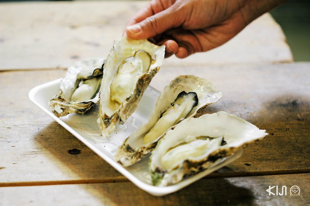 มา ชมซากุระ ที่ มิยากิ ต้องไม่พลาดมากินหอยนางรมที่นี่นะ