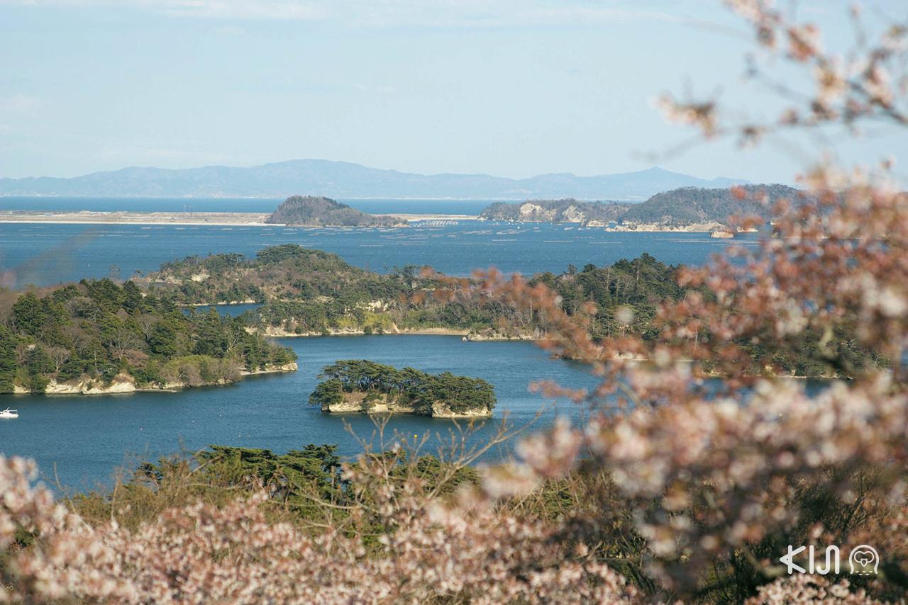 ทิวทัศน์อันแสนงดงามของมัตสึชิมะ (Matsushima) จ.มิยากิ