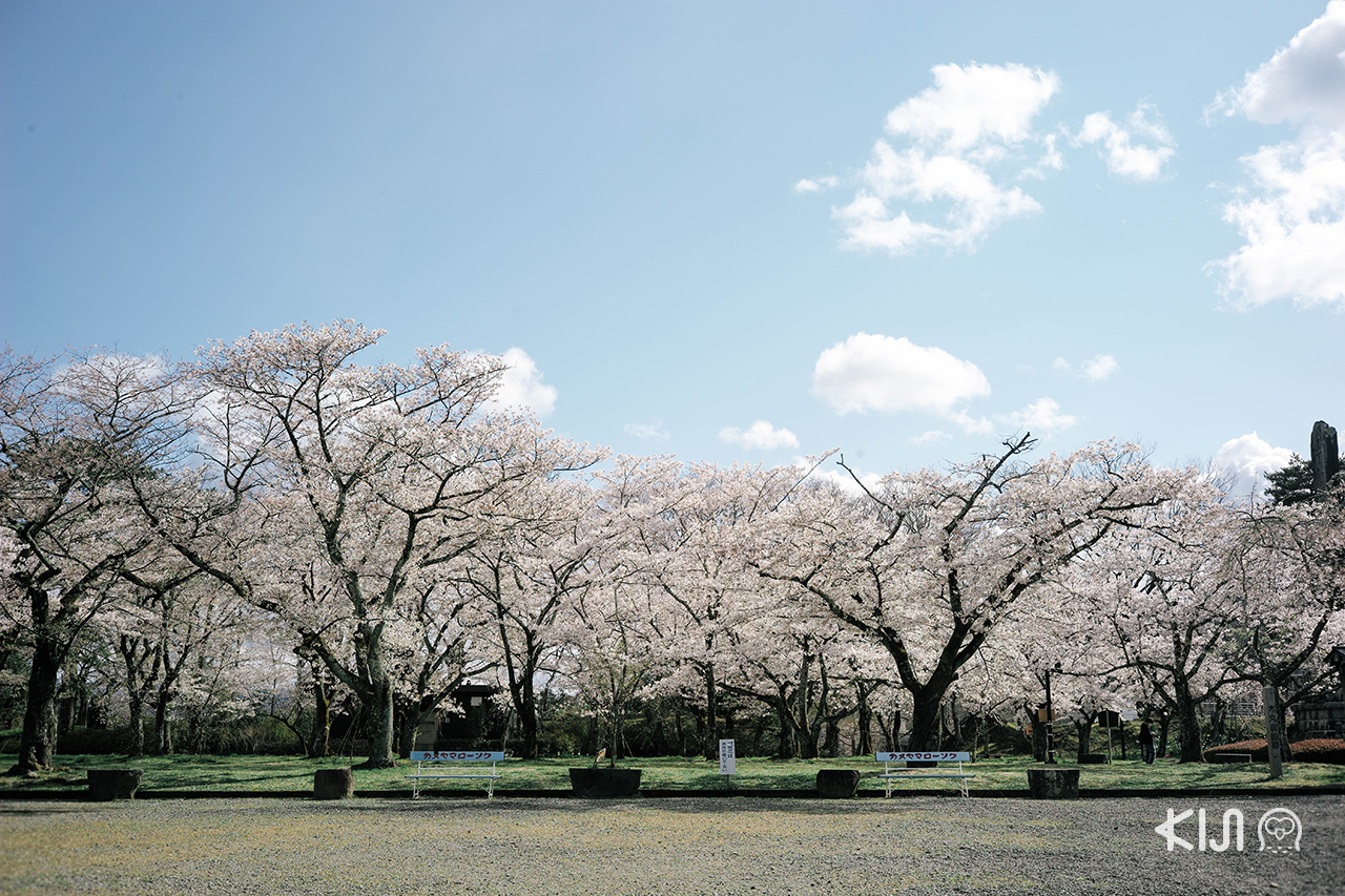 ปิดท้ายทริป ชมซากุระ ใน มิยากิ ด้วยสวนซากุระขนาดใหญ่แห่งนี้