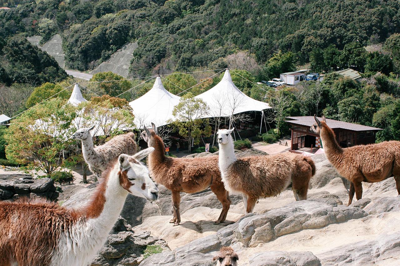 Nagasaki Biopark สวนสัตว์ในจ.นางาซากิ