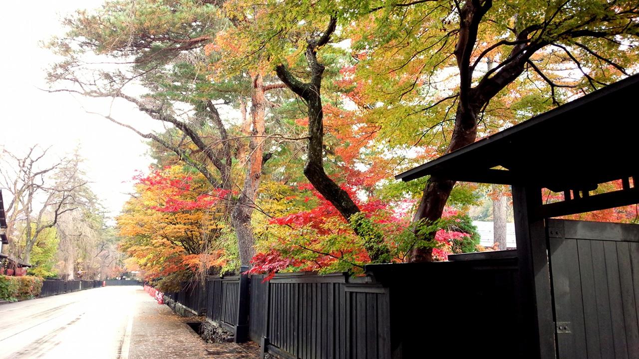 เที่ยว โทโฮคุ ช่วง ฤดู ใบไม้เปลี่ยนสี : หมู่บ้านซามูไรคาคุโนะดาเตะ (Kakunodate Bukeyashiki)