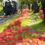 steam locomotive-the paleo express-scenic beauty-japan