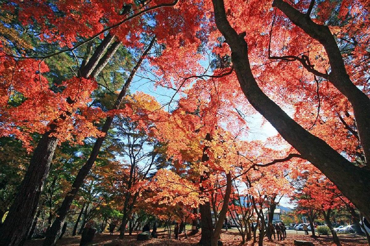 สวนสึกิโนะอิชิ โมมิจิ (Tsukinoishi Momiji Park) จุดชมใบไม้เปลี่ยนในจังหวัดไซตามะ