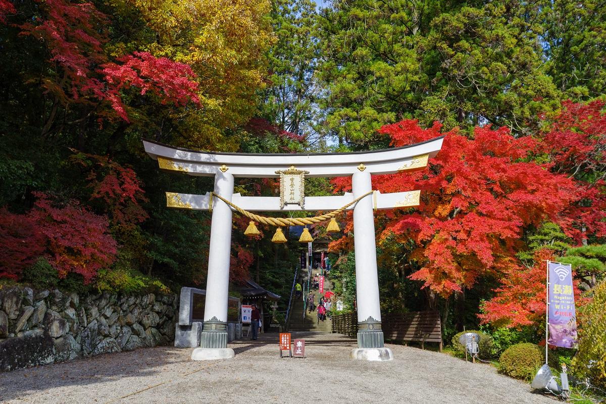 บรรยากาศช่วง ฤดูใบไม้ร่วง ที่ ศาลเจ้าโฮโดซัง (Hodosan Shrine) ศาลเจ้าเก่าแก่ในจ.ไซตามะ