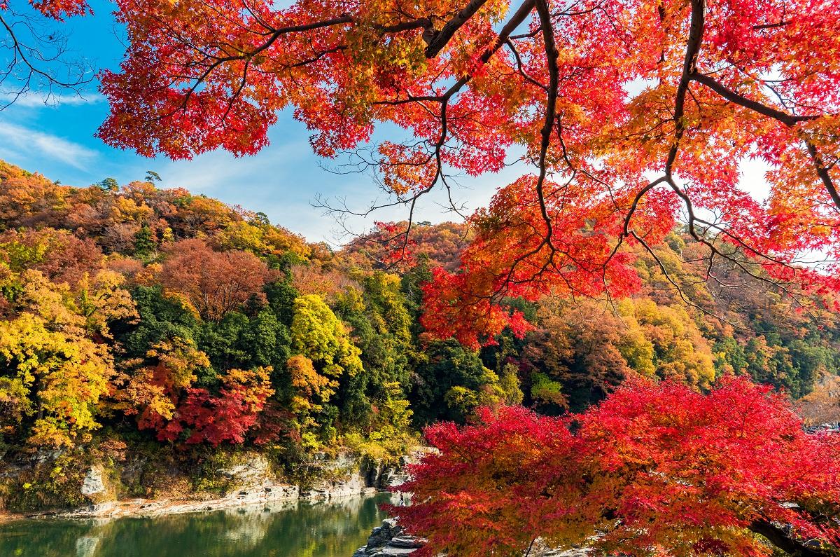 ชมใบ้ไม้เปลี่ยนสี ฤดูใบไม้ร่วง ที่แม่น้ำอาราคาวะ (Arakawa River) จ.ไซตามะ (Saitama)