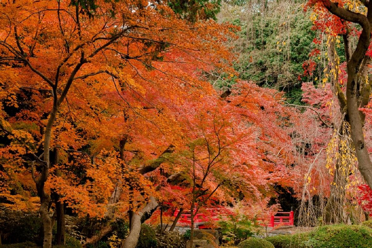 สามารถชมใบไม้เปลี่ยนสีสวยๆ ได้ใน วัดคิตะอิน (Kita-in Temple) จ.ไซตามะ