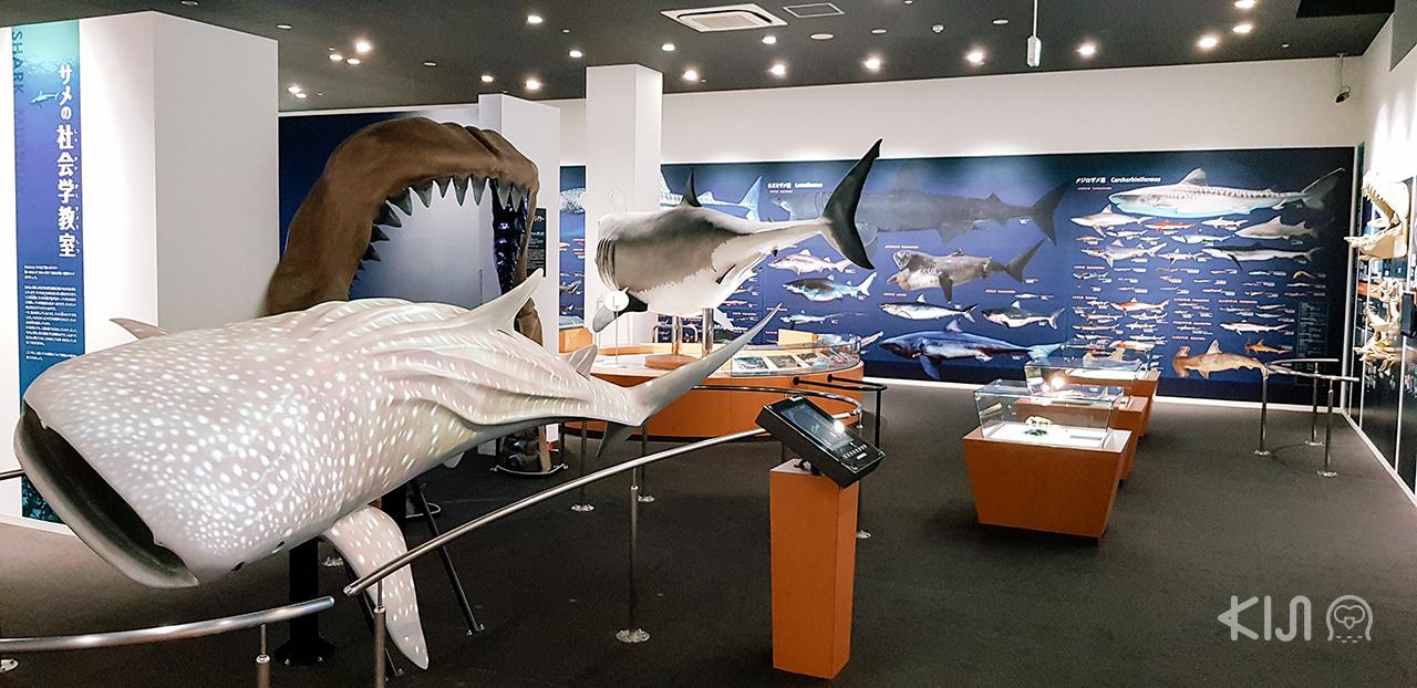 บรรยากาศภายในพิพิธภัณฑ์ปลาฉลาม (Shark Museum) เมือง Kesennuma จ.มิยากิ