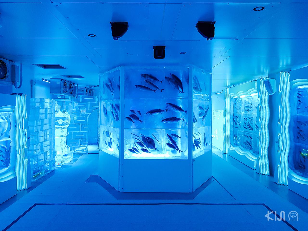 Ice Aquarium เมืองเคเซ็นนุมะ (Kesennuma) จ.มิยากิ