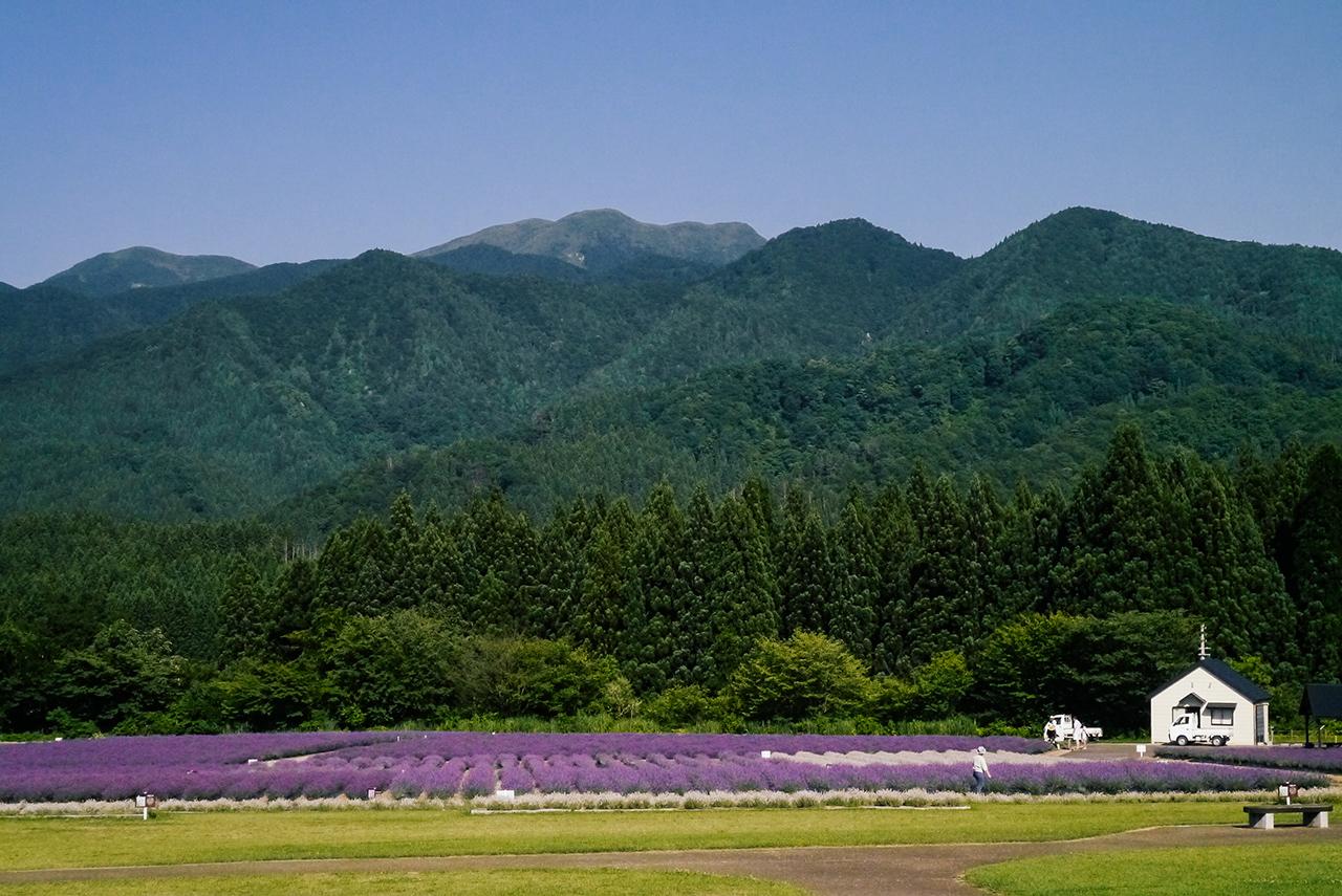 """สถานที่เที่ยวในภูมิภาค """"โทโฮคุ"""" ฤดูร้อน - ทุ่งดอกลาเวนเดอร์ ที่เมืองมิซาโตะ (Misato) จ.อาคิตะ"""