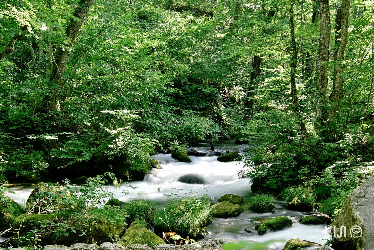 บรรยากาศภายในลำธารโออิราเสะ (Oirase) ช่วงต้น ฤดูร้อน ของจ.อาโอโมริ ภูมิภาค โทโฮคุ