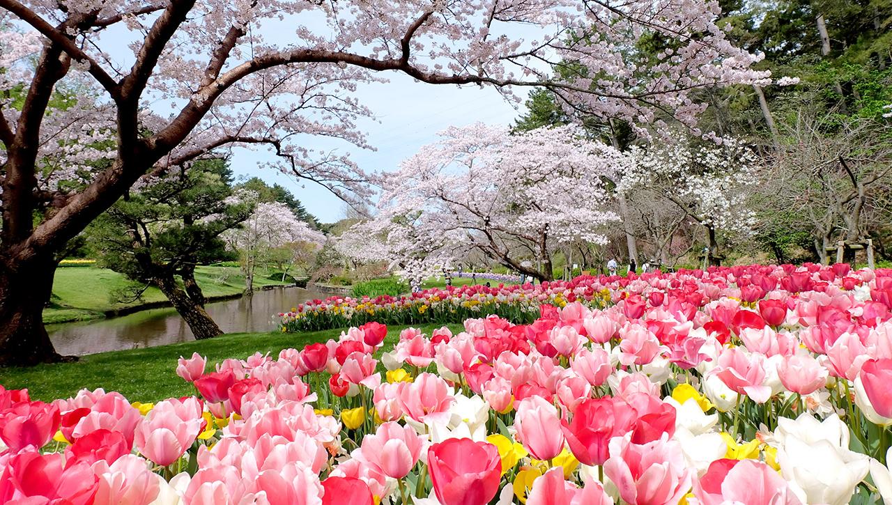 เที่ยวฮามามัตสึ พร้อมชมดอกไม้ ณ Hamamatsu Flower Park