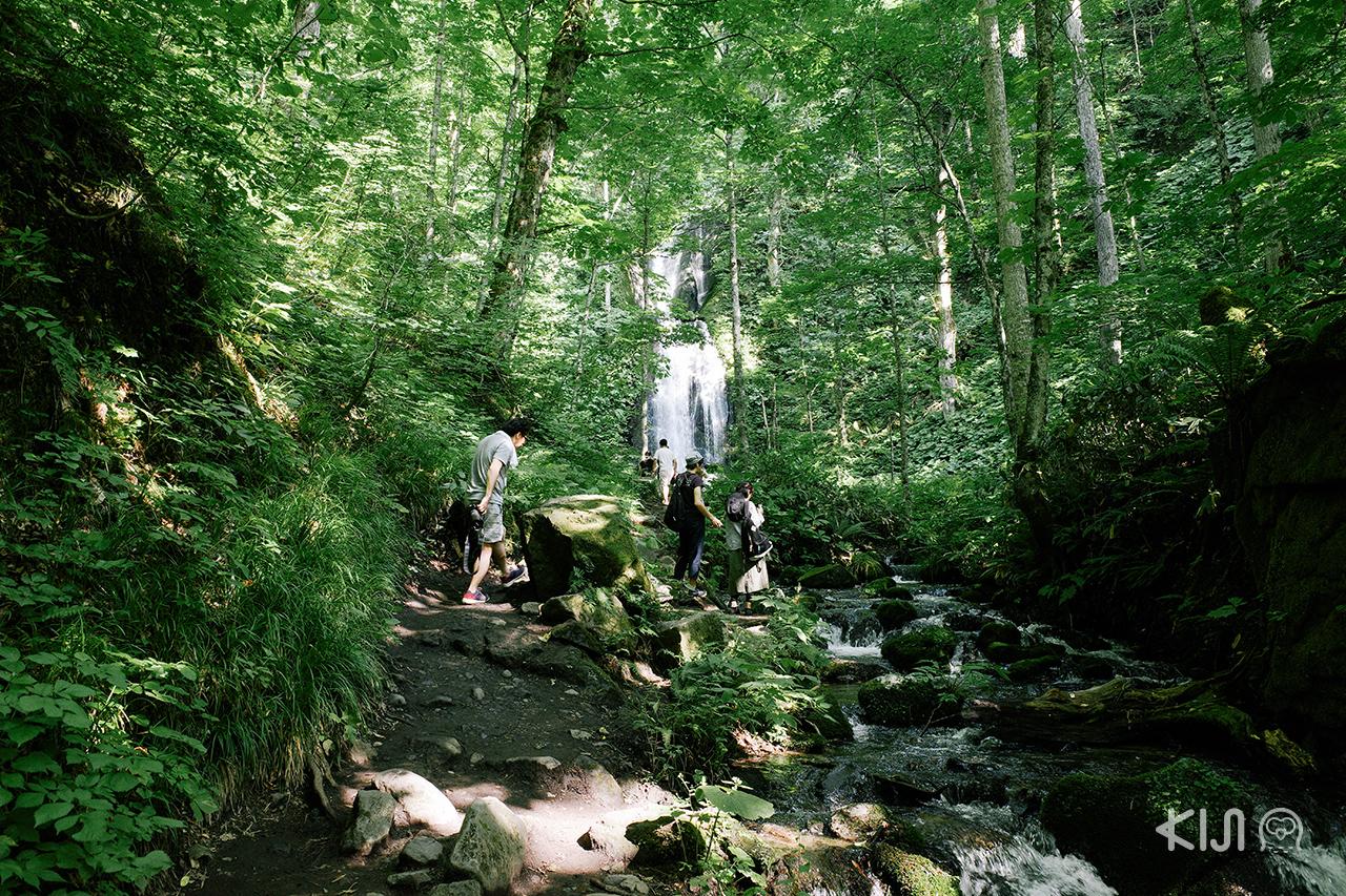 ผู้คนต่างนิยมมาเที่ยว โทโฮคุ ในช่วง ฤดูร้อน ที่ ลำธารโออิราเสะ (Oirase) จ.อาโอโมริ
