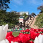 flowerpark0