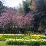 flowerpark3