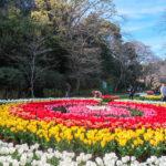flowerpark4