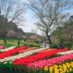 flowerpark5