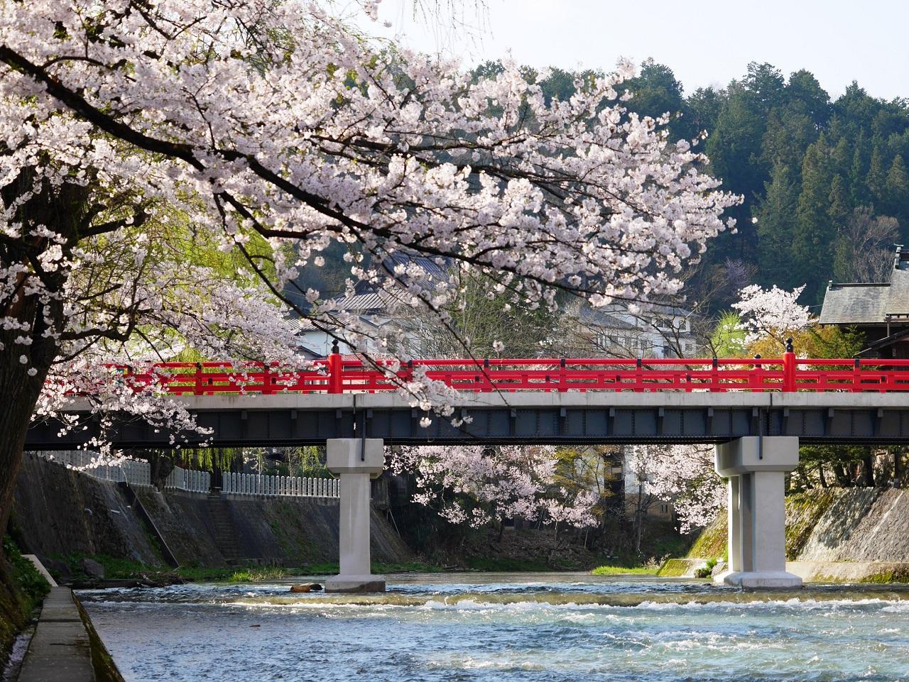 ทาคายาม่า (Takayama) ฤดูใบไม้ผลิ