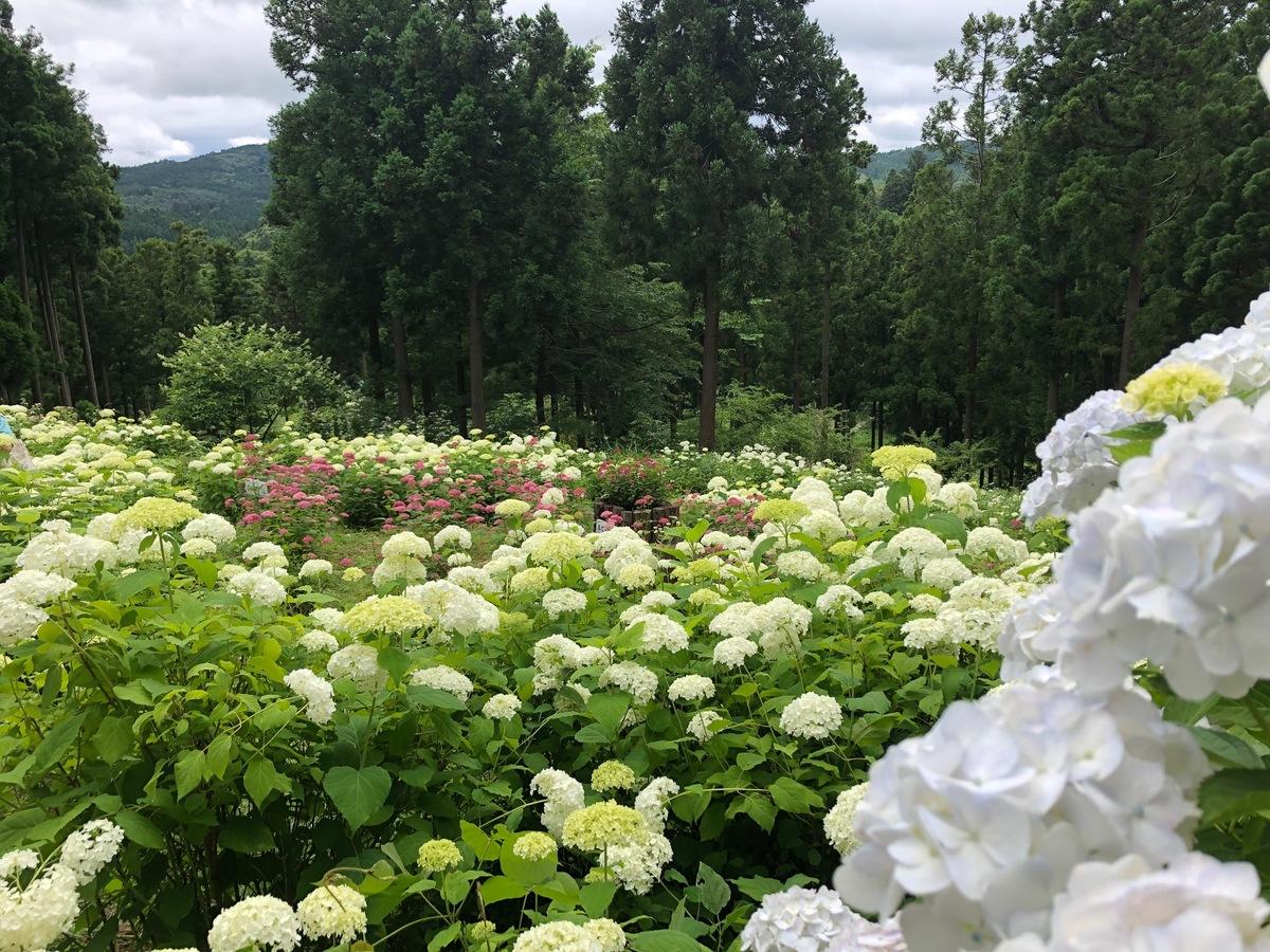 """สถานที่เที่ยวในภูมิภาค """"โทโฮคุ"""" ฤดูร้อน - สวนมิจิโนะคุอาจิไซ (Michinoku Ajisai Garden)"""