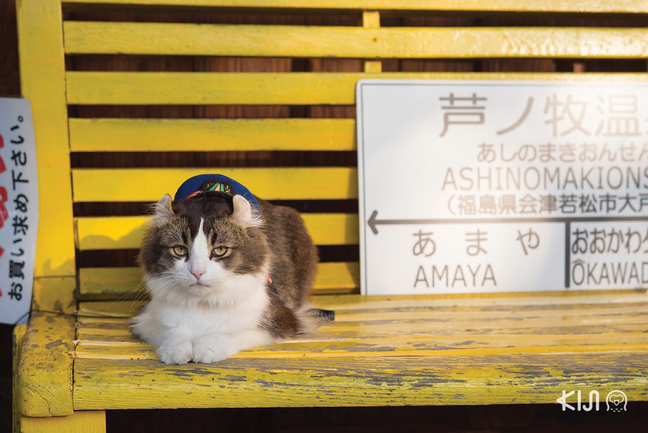 เที่ยว จ.ฟุกุชิมะ (Fukushima) - สถานีแมว Ashinomaki-Onsen